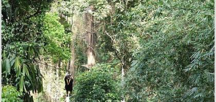 【泰國清邁】Jungle Fly 刺激好玩的叢林飛行 緊張尖叫指數大勝雲霄飛車