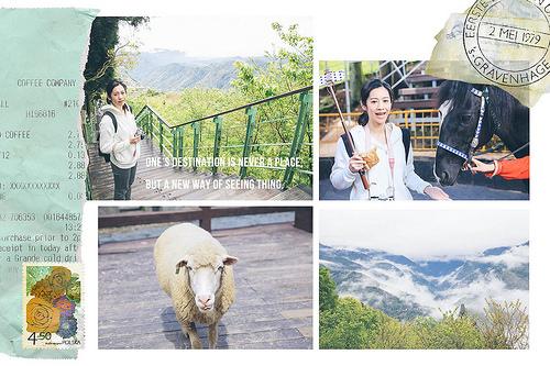南投::清境Day2 清境農場 偶爾也要親近大自然 餵綿羊、馬術秀