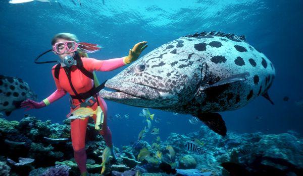 great Barrier Reef, Australia (Foto: rtseablog)