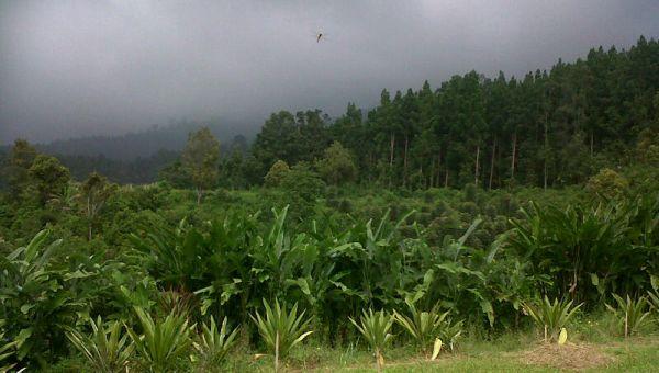 Taman Nasional Gunung Halimun Salak (Foto: Marieska/Okezone)
