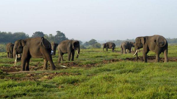 Gajah di Taman Nasional Way Kambas (foto: indonesiatravel)