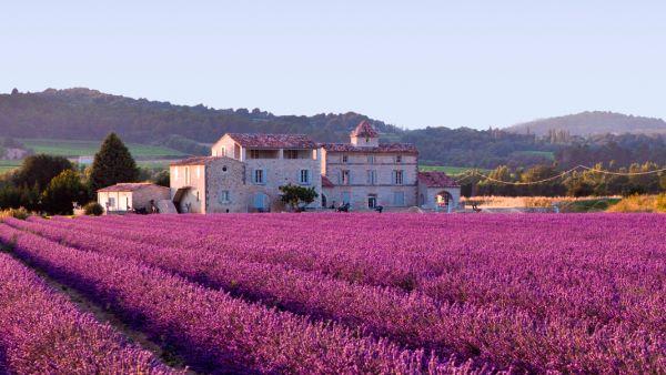 Ladang lavender di Provence, Prancis (Foto: wikimedia)