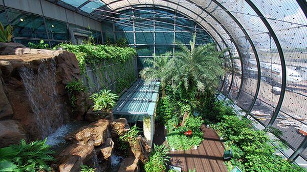 Taman kupu-kupu di Bandara Changi, Singapura (Foto: carbonated)