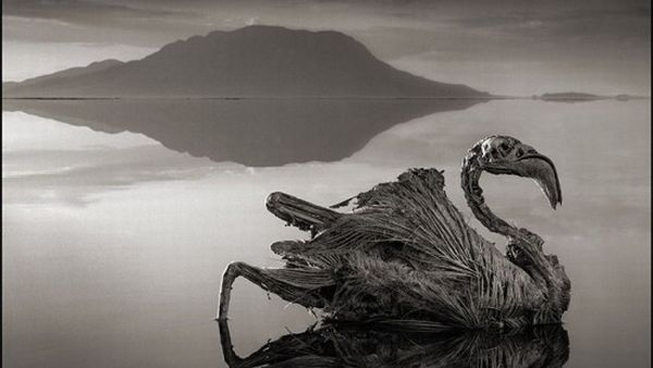 Danau Natron, Tanzania Utara (Foto: odditycentral)