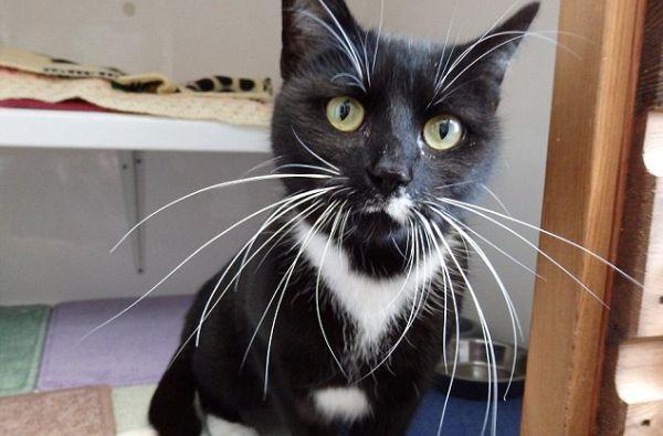 Moggy, kucing dengan kumis terpanjang. (Foto: SWNS/Daily Mail)