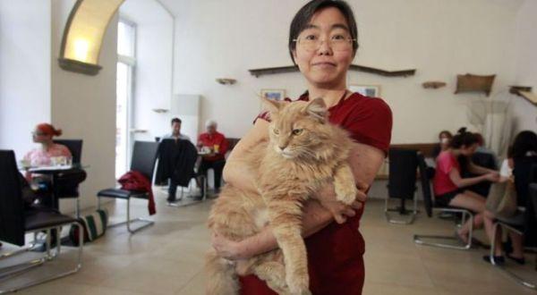 Kafe khusus untuk kucing (Foto: Metro)