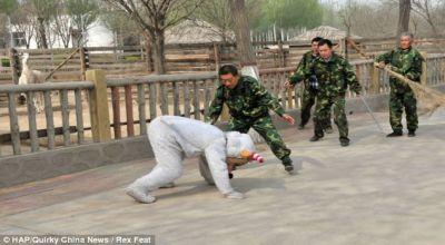Latihan dengan gunakan kostum binatang (Foto: Daily Mail)