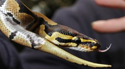 Cara agar Rumah tidak dimasuki ular