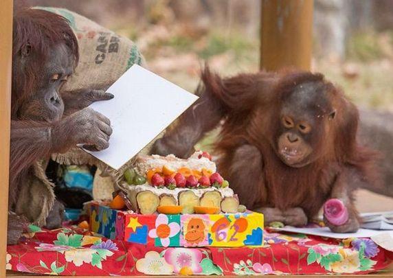 Foto Gypsy Chan berbagi kue dengan cucunya (Foto: HoSpot Media/Mirror)
