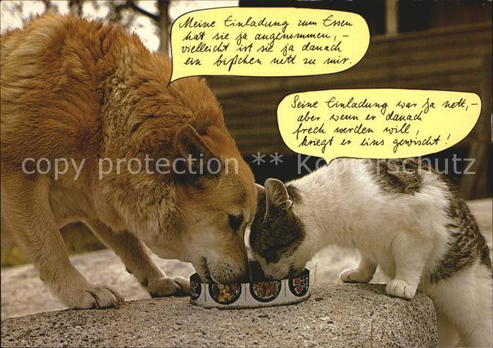 Hunde Katze Humor Kat Tiere Nr Kt05115 Oldthing