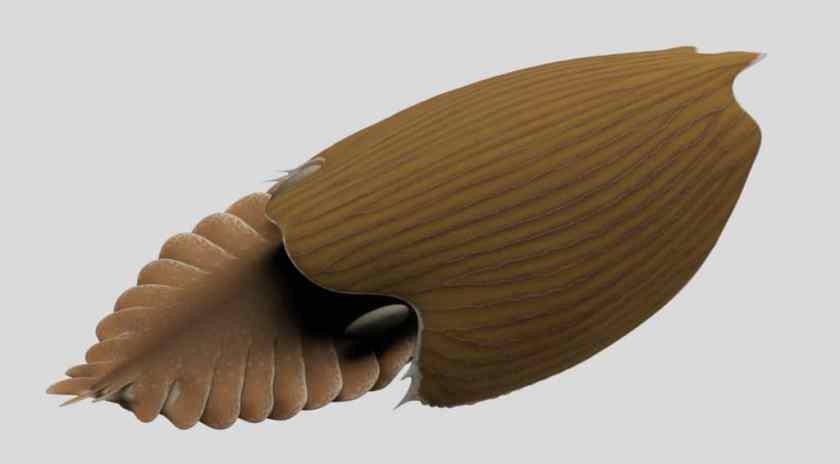 3D rendering of Titanokorys gainesi