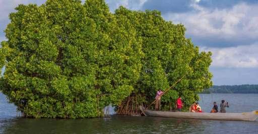 Munroe Island, an ideal spot for a canoe cruise   Kollam   Manorama English