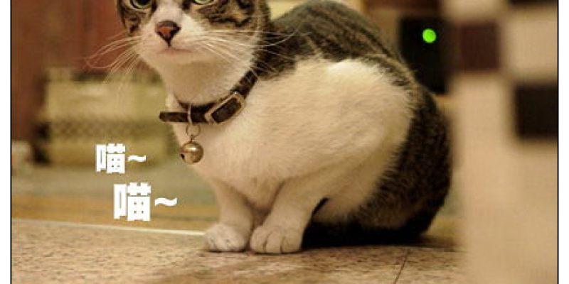 【府城漫步食記】肥貓故事館:老屋創作藝廊空間~只有萌貓當家沒有肥貓
