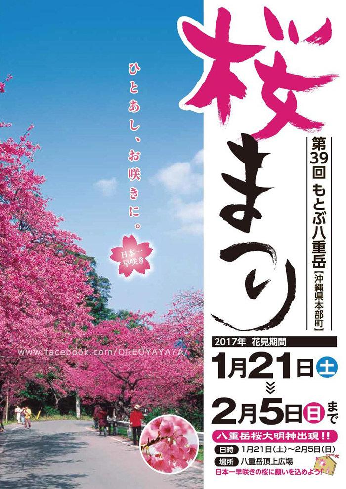 沖繩。2017年日本最早的櫻花。本部八重岳櫻花。第39回もとぶ八重岳桜まつり(1/21~2/5)