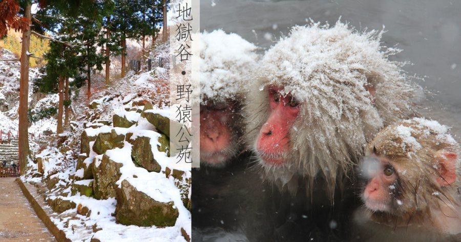長野景點│地獄谷野猿公苑交通方式~看猴子泡溫泉的療癒行程!