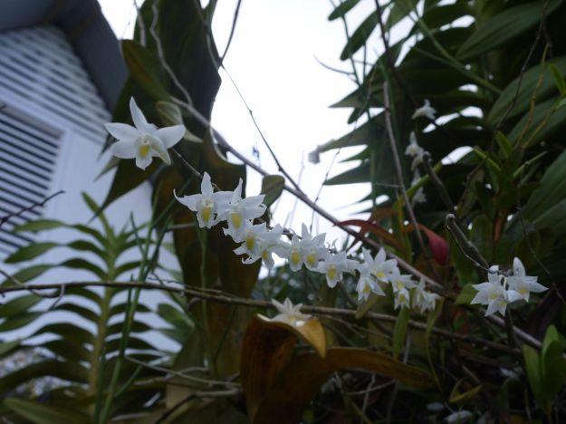 C'est super mignon, mais la floraison dure à peine plus longtemps qu'une journée, alors vaut mieux pas se tromper de jour !