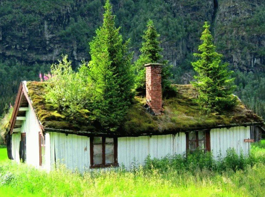un arbre sur le toit