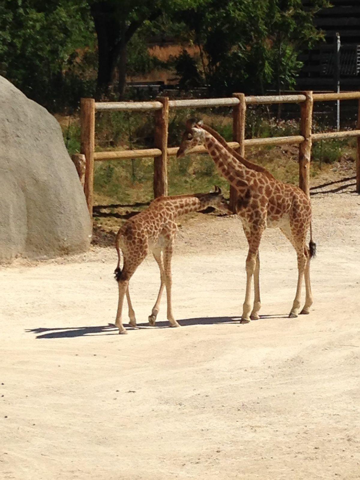 Sortie en famille au zoo de Vincennes