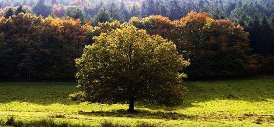 L'arbre qui cache la forêt, les vrais enjeux du GCO ...