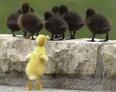 """Résultat de recherche d'images pour """"canard"""""""