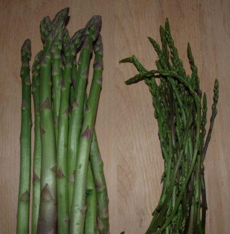 asperges vertes et asperges sauvages