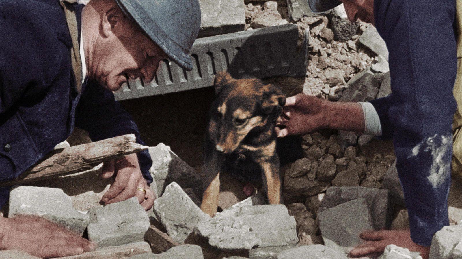"""Résultat de recherche d'images pour """"les animaux pendant la guerre 39 45"""""""