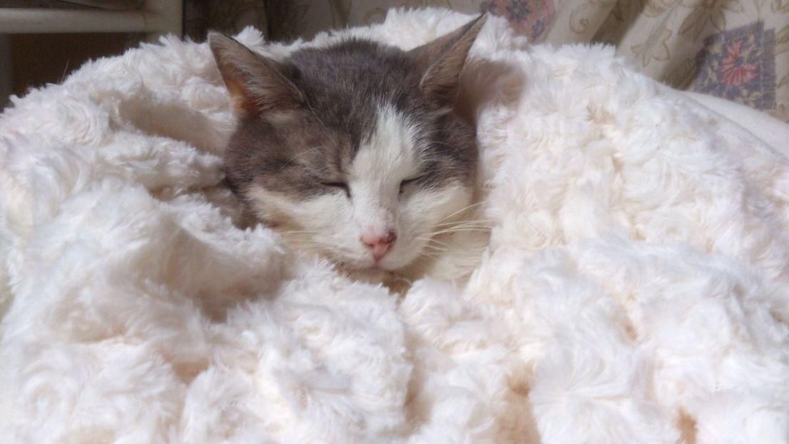 Le sommeil d'une petite princesse