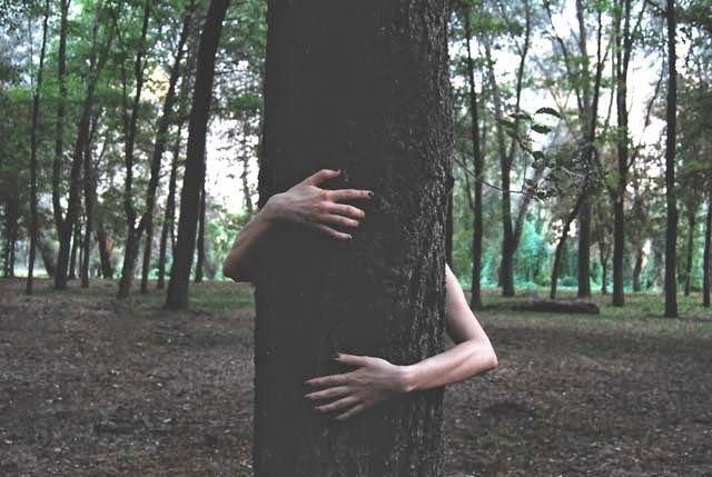 La science prouve qu'étreindre des arbres est bon pour la santé