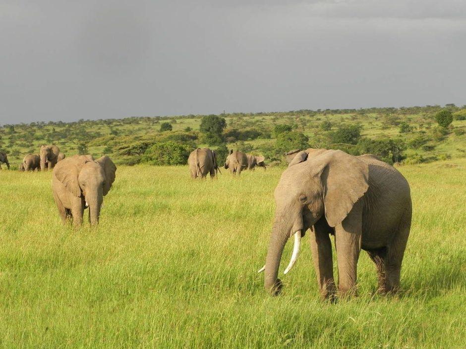 Me & My Camera: Pieces of Kenya