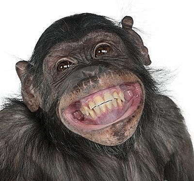 """Résultat de recherche d'images pour """"la banane sourire"""""""