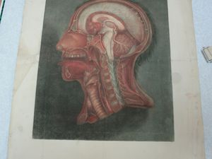 Planches gravées par l'anatomiste J. Gautier d'Agoty, élève de le Blon. Salissures, lacunes, mouillures, pliures...