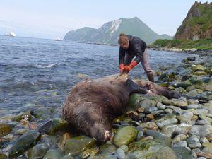 Alaska (USA) - 24 Juillet 2015