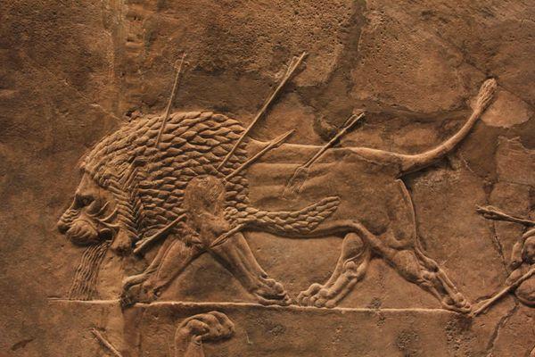Chasse aux lions dans la région de Ninive (fresque assyrienne)