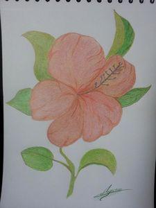 Fleur de passion - dessin aux crayons - photographié de ha