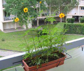 composteur balcon appartement