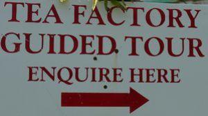 tea-factory.jpg