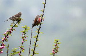 37b - Mehr Vögelchen 2946
