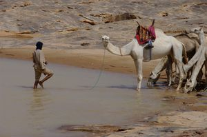 Camel-in-the-eau.jpg