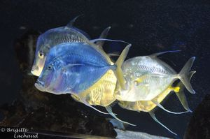 Monaco-musee-oceano211212-095--c-Brigitte-Lachaud-.JPG