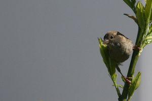 37 - Vögelchen 9879