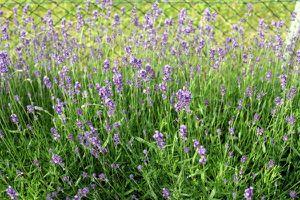 36b - Mehr Garten 0907