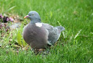37b - Mehr Vögelchen 2713