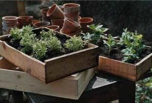 Plantstuff.co.uk-Wooden-Seed-Trays.jpg