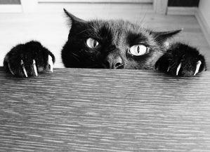 empecher un chat de vous mordre ou vous griffer