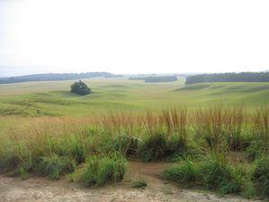 Nyonié - La savane