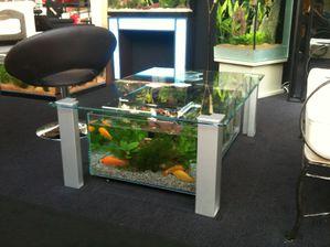 Aquarium Ou Table Basse De Salon Aquatic Concept