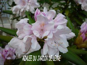 AZALEE2