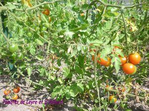 tomatecjardin