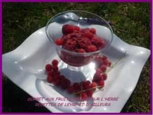 SORBETFRUITS ROUGES2
