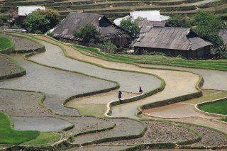 Viet riz 1